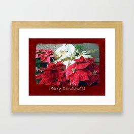 Mixed color Poinsettias 3 Merry Christmas P5F5 Framed Art Print