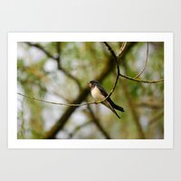 swallow Art Prints featuring Swallow by Ria Pi