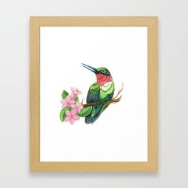 Summer Hummingbird Framed Art Print