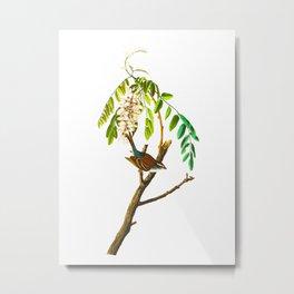 Chipping Sparrow Bird Metal Print