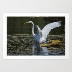 Water Landing Art Print