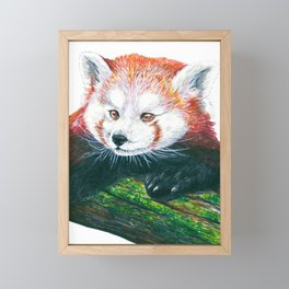 Red panda bear  Framed Mini Art Print