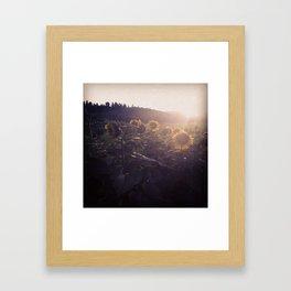 Sunflowers at Biltmore Framed Art Print