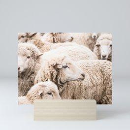 Wall to wall sheep Mini Art Print