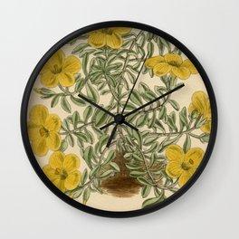Linum elegans 144 8769 Wall Clock