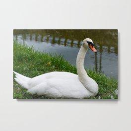 Beautiful Swan in Japan Metal Print
