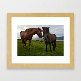 Icelandic horses in icelandic nature Framed Art Print