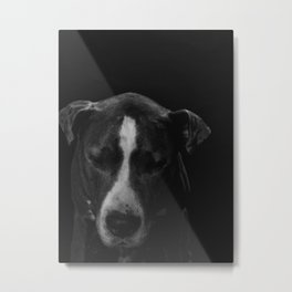 DOGS AND CULTURE COLLIDE Metal Print