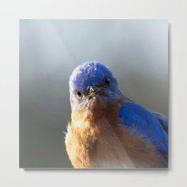 Watercolor Bird, Eastern Bluebird 08, Middletown, Maryland Metal Print
