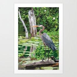 Great Blue Heron in Marsh Art Print
