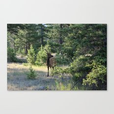 Young Wildlife Canvas Print
