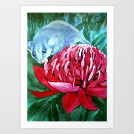 The Possum and the Waratah Art Print