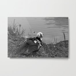 Duck drying under the Sun in South Florida Metal Print