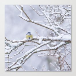 Blue Tit On A Snowy Branch Winter Scene #decor #society6 Canvas Print