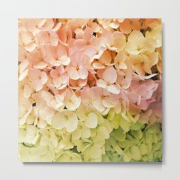 Delicate Pastel Multicolor Hydrangea Metal Print