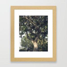 Carob tree Framed Art Print