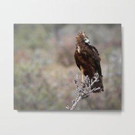 Birds of Namibia Metal Print