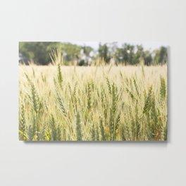 Summer Wheat 2 Metal Print