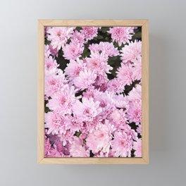 A Sea of Light Pink Chrysanthemums #1 #floral #art #Society6 Framed Mini Art Print