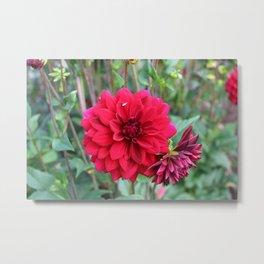 Blooming Red Metal Print