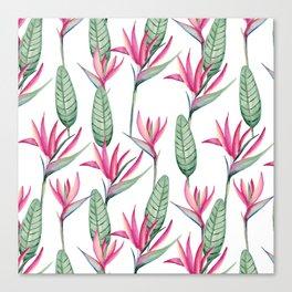 Pink strelitzia Canvas Print