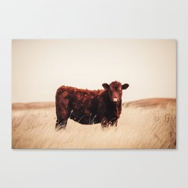 Red Angus Cow Art Canvas Print