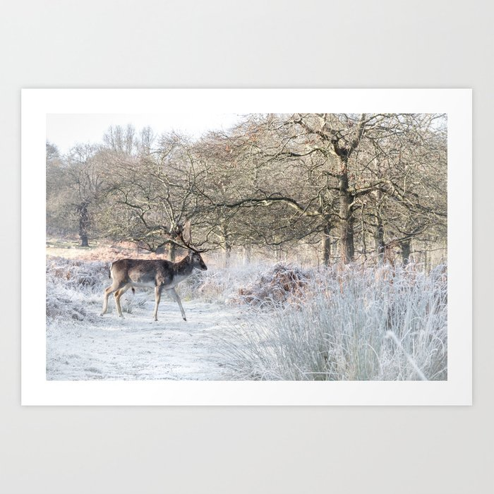 Fallow Deer Richmond Park Art Print By Sirliraitma Society6