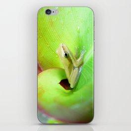 Baby Frog iPhone Skin