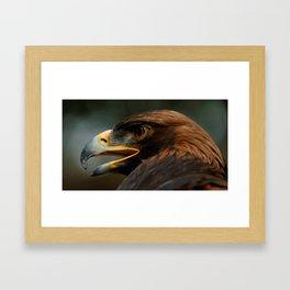 Golden Eagle | Gaze | Nature | Wildlife Photography | Bird of Prey Framed Art Print