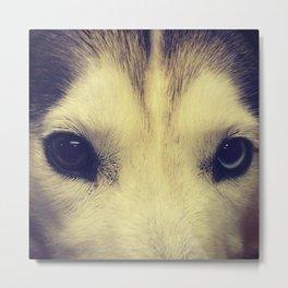 Heterochromia Husky Metal Print