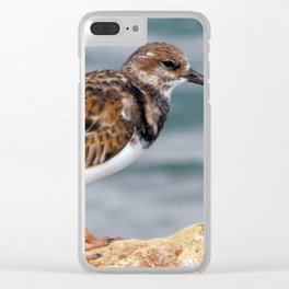 Profile of a Ruddy Turnstone Clear iPhone Case