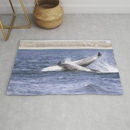 Playful dolphins Rug