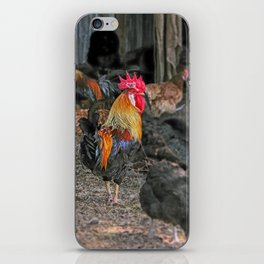 Rooster in the hen house iPhone Skin