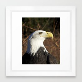 Majestic Eagle Framed Art Print