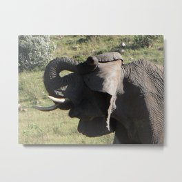 Just a little bit shy...  Metal Print