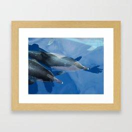 Dolphins and human shadows Framed Art Print