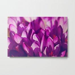 Purple Spring Beauties Metal Print
