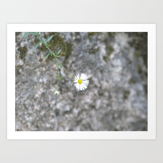 White flower on the stone Art Print