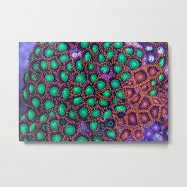 Zoanthus Corals Mix Metal Print