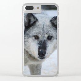Lone wolf roams the Canadian Rockies Clear iPhone Case
