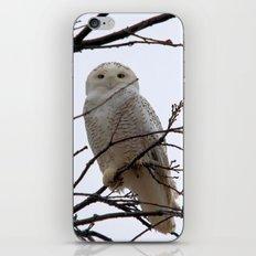 Snowy Owl in the Treetop iPhone & iPod Skin