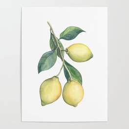 Lemon Dreams Poster