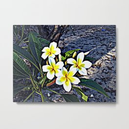 Beautiful Tropical Frangipani Plumeria Flowers Metal Print