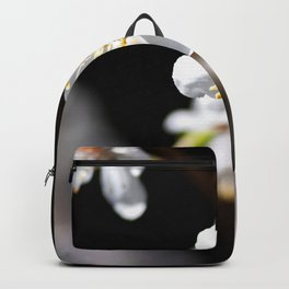 White Japanese Apricot Flowers On A Tree In Spring. Black Background Backpack