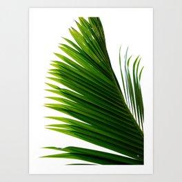 Plam Leaf Art Print