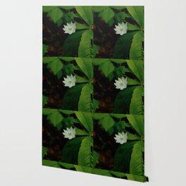 Wild Strawberry Blossom Wallpaper