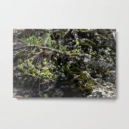 Mossy Stones Metal Print