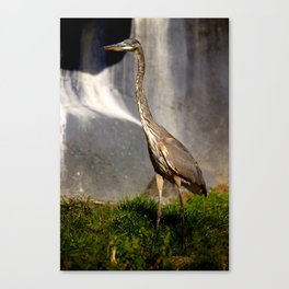 Great Blue Heron - Hunting Canvas Print