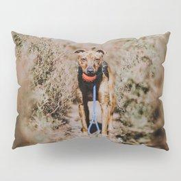 Dog by Mitchell Orr Pillow Sham