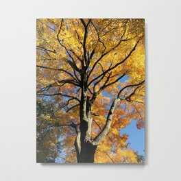 October Sugar Maple Metal Print